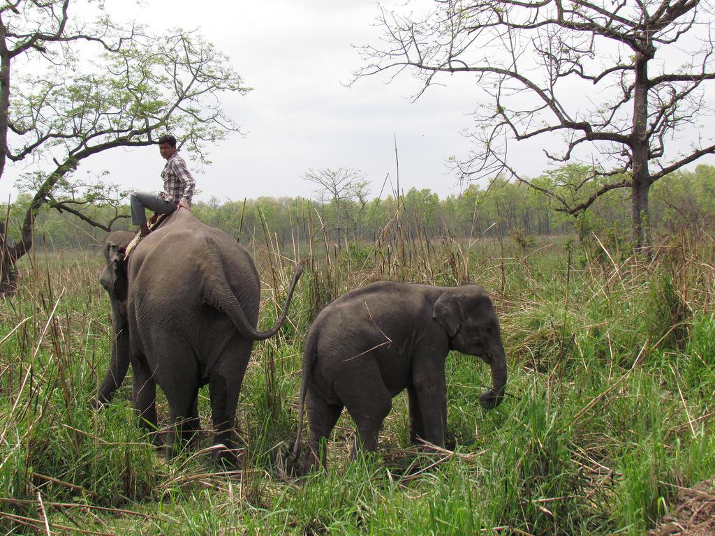 Elephant ride in Nepal