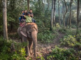Getting closer to the wildlife of Nepal