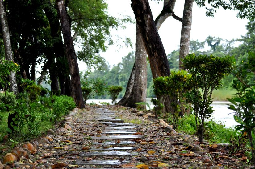 Jungle walk in Chitwan