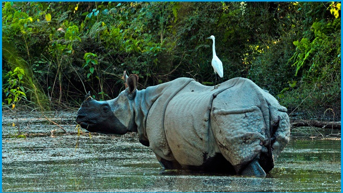 https://www.himalayansherpaholidays.com/activity/wildlife-tour-in-nepal-jungle-safari/
